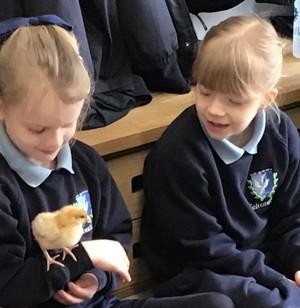 Easter chicks 3
